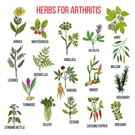 Herbs to fight arthritis boswellia, willow, celery, ginger, arnica, wintergreen, andelica, alfalfa, hop, licorice, ginseng, rosemary, turmeric, stringing nettle, sesame, cayenne pepper, oregano 일러스트
