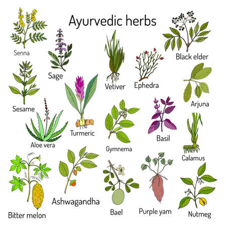 Ayurvedic herbs, natural botanical set