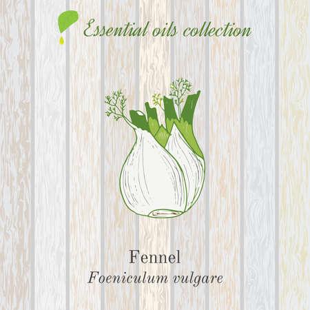 alternative medicine: Pure essential oil collection, fennel. Wooden texture background.