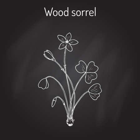 sour clover: Wood Sorrel, Wild flower