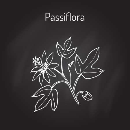 Passiflora, or passion flowers