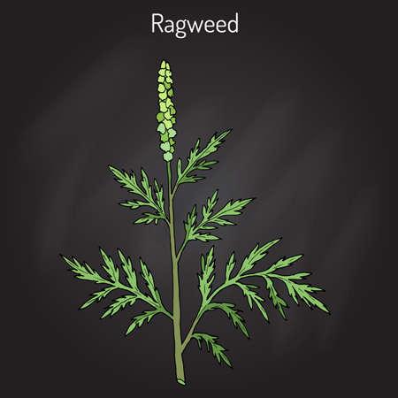 weeds: Common ragweed Ambrosia artemisiifolia