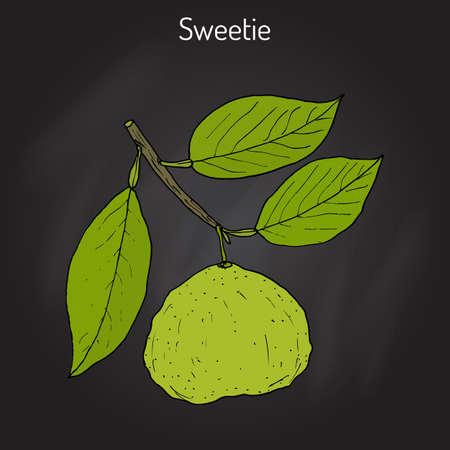 sweetie: Sweetie citrus oroblanco fruit