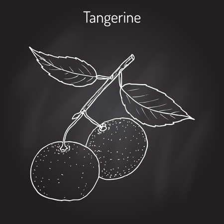 Tangerine fruit Citrus tangerina , mandarin variety