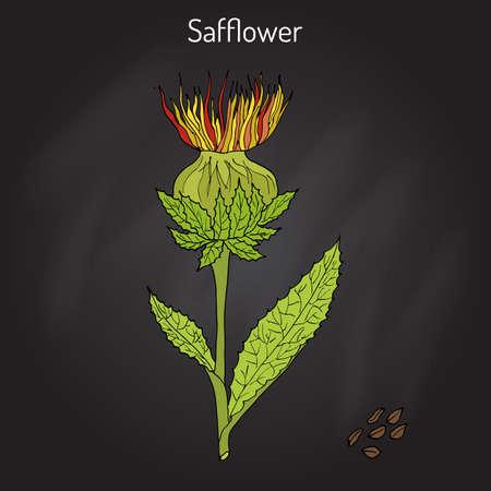 Safflower Carthamus tinctorius , oil plant