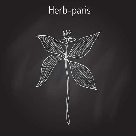 toxicant: Herb-paris, or true lover s knot Paris quadrifolia , poisonous plant