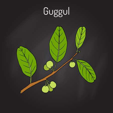 El mejor guggul de la planta de Ayurvedic Commiphora wightii, o árbol de bdellium indio, árbol de mirra de Mukul Ilustración de vector