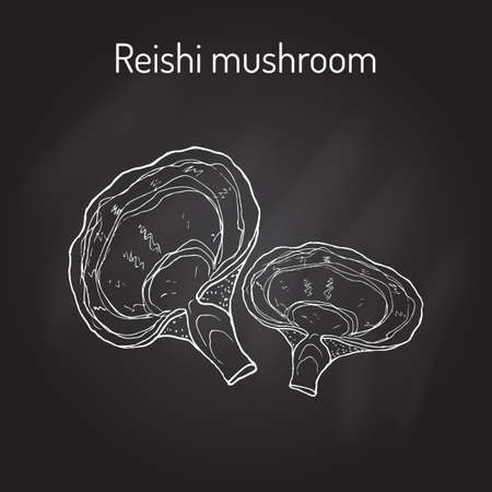 fungi: Reishi mushroom Ganoderma lucidum , superfood, medicinal plant.