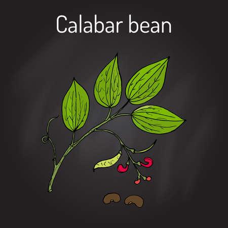 カラバル豆 Physostigma Venenosum、薬用植物