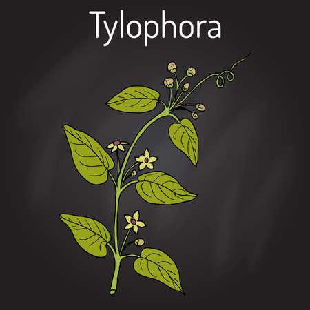 Tylophora asthmatica, medicinal plant. Hand drawn botanical vector illustration