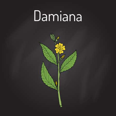 Damiana Turnera diffusa, 약용 식물. 손으로 그려진 된 식물 벡터 일러스트 레이 션
