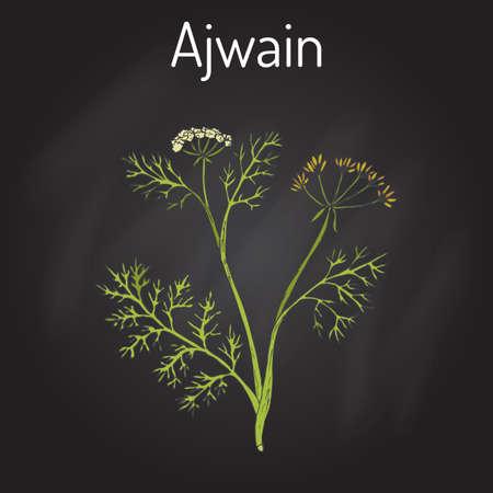 weeds: Ajwain trachyspermum ammi , or ajowan caraway, bishop weed, carom - spice herb. Hand drawn botanical vector illustration Illustration