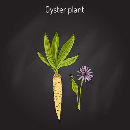 edible plant: Goatsbeard Tragopogon dubius , or yellow salsify, western goat s-beard, wild oysterplant - edible plant