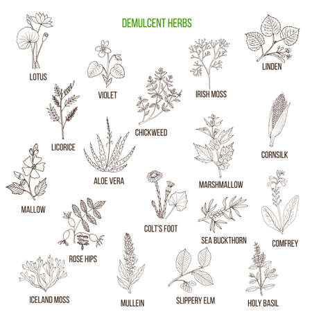 Demulcent herbs. Hand drawn set