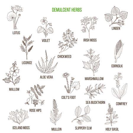 Herbes démultipliées. Ensemble dessiné à la main