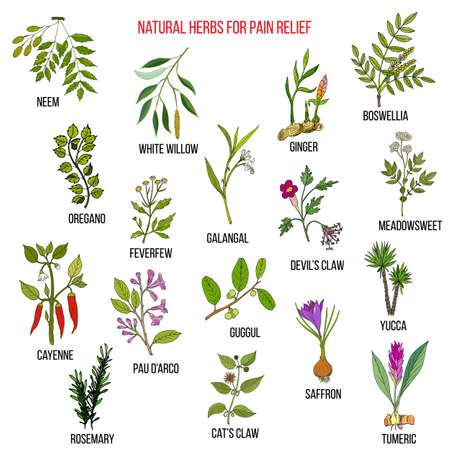 homeopathic: Best natural herbs for pain relief. Illustration