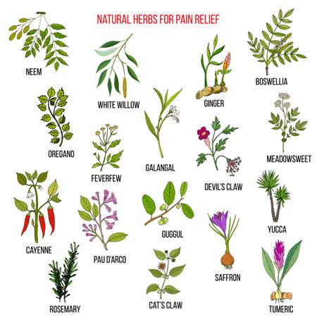 Las mejores hierbas naturales para el alivio del dolor.