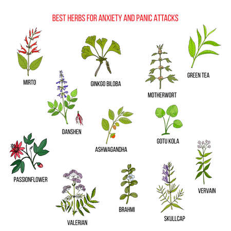 Meilleures herbes naturelles pour l'anxiété et les attaques de panique
