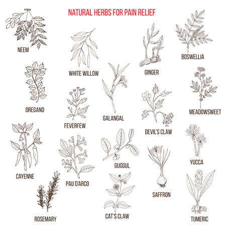 Best natural herbs for pain relief. Vektorové ilustrace