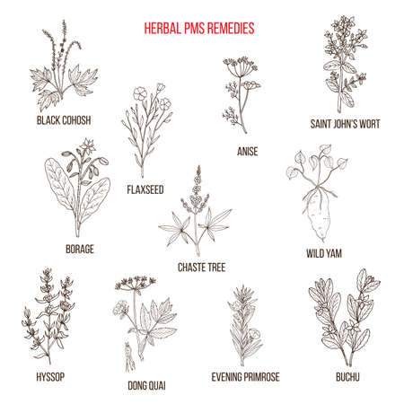 Herbal remedies for PMS. Hand drawn vector set of medicinal plants.
