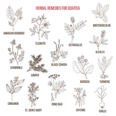 Herbal remedies for sciatica.
