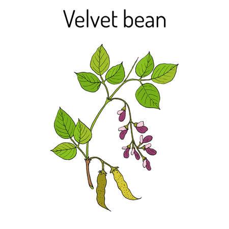 Branch of a Velvet plant icon.