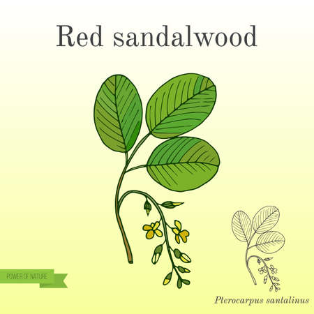Red sandalwood branch Иллюстрация