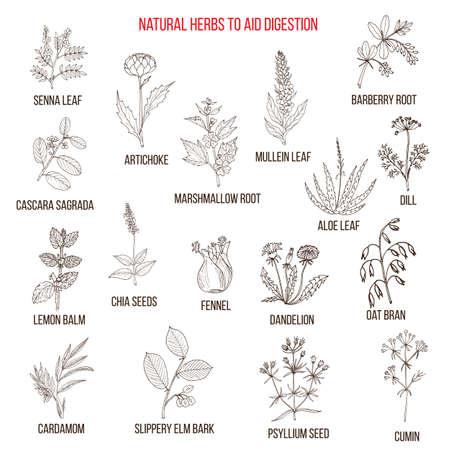 Remedios herbales para la digestión de la ayuda