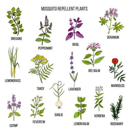 최고의 모기 구충제 식물 일러스트