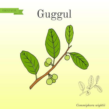 Best Ayurvedic plant guggul Stock Photo