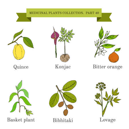 Vintage collection of medical herbs and plants Ilustracja