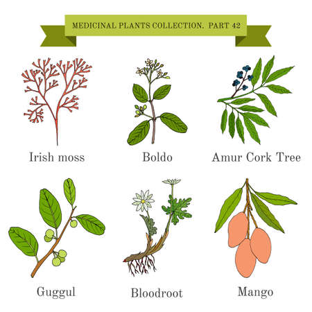 Vintage collection of medical herbs and plants 일러스트