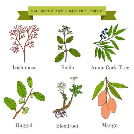 Vintage Sammlung von medizinischen Kräutern und Pflanzen