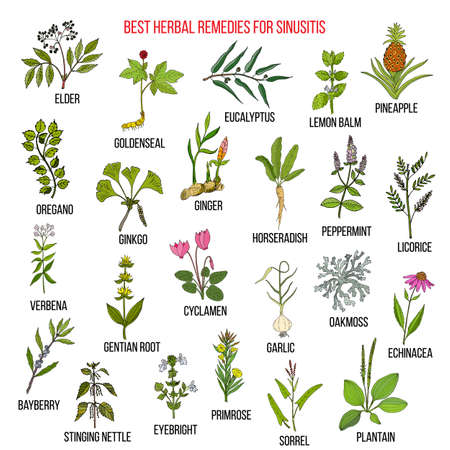 Best herbal remedies for sinusitis