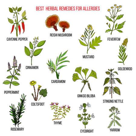 Best herbal remedies for allergies
