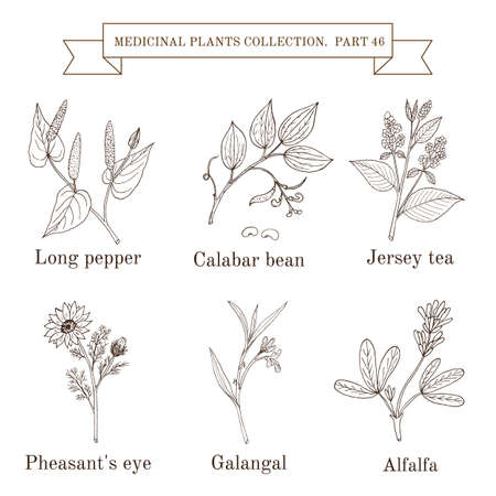 Vintage collection of hand drawn medicinal herbs and plants Stock Vector - 89182508