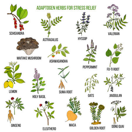 Best adaptogen herbs for stress relief Stock Photo