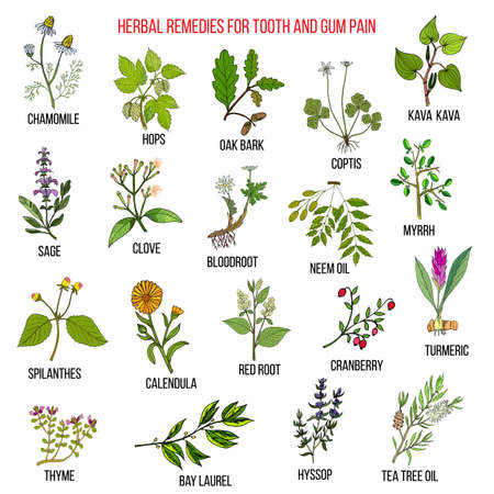 Best herbal remedies for tooth and gum pain Фото со стока