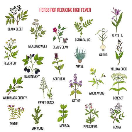 Los mejores remedios herbales para reducir la fiebre alta