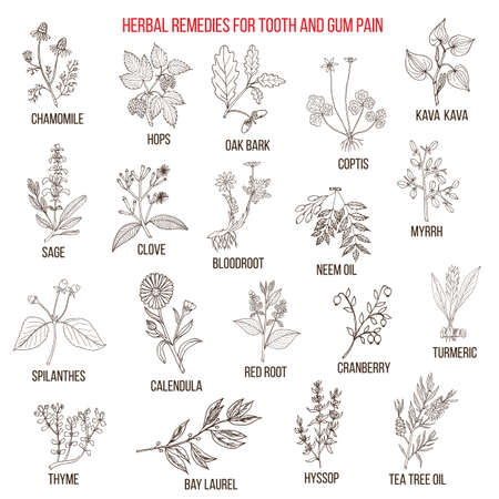 Best herbal remedies for tooth and gum pain illustration.