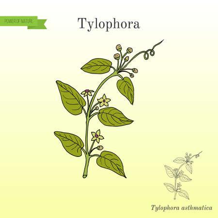 Tylophora asthmatica, medicinal plant