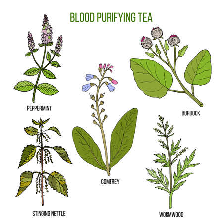 Best herbs for blood purifying tea