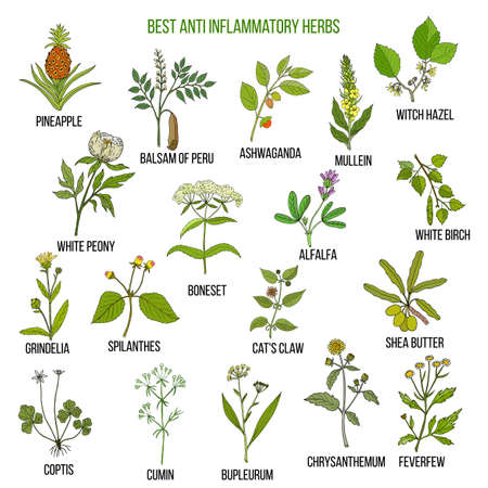 Best anti-inflammatory herbs Vector set