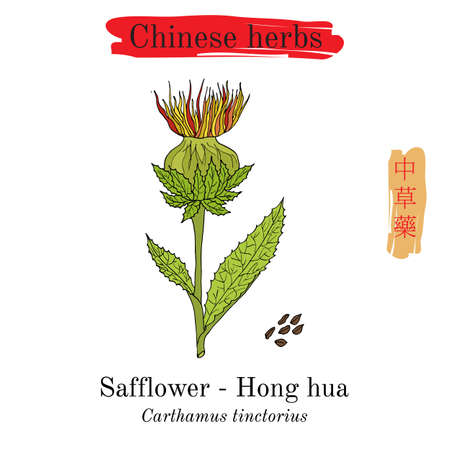Medicinal herbs of China. Safflower Carthamus tinctorius