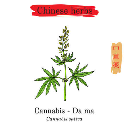 Medicinal herbs of China. Safflower Carthamus tinctorius