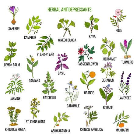 Best herbal antidepressants