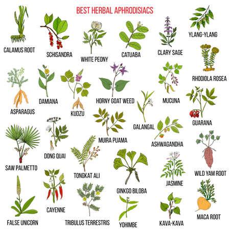 Best natural herbal aphrodisiacs