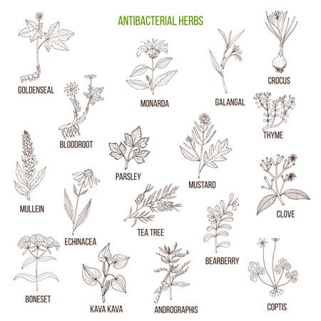 Set of antibacterial herbs illustration Stock Vector - 89922661