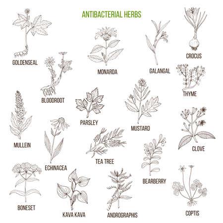 Set of antibacterial herbs illustration Illustration