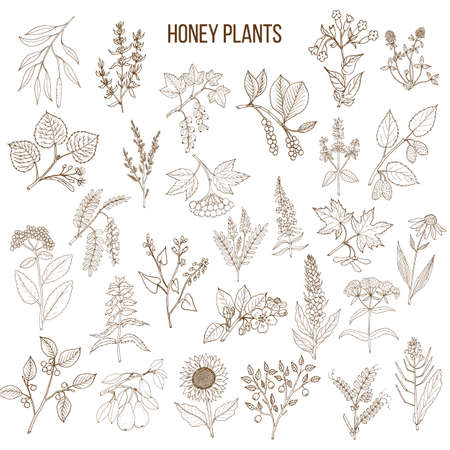 Plants seamless pattern. Nectar sources for honey bees